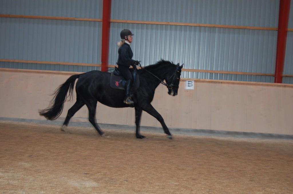 November 2012 Zobel i ridning, det er en fornøjelse at ride en så arbejdsglad hoppe !