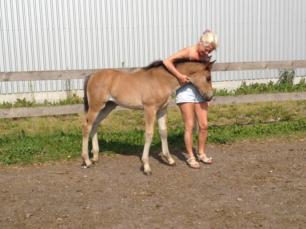 7. juli 2013 Lady Marion af Bjerrede er 2 måneder gammel og stadig kælen som en hundehvalp.