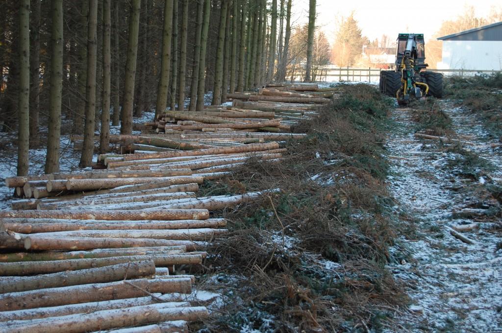 Januar 2013 Vi har fældet en masse skov. Nu bliver der ekstra meget foldplads og græs :-).