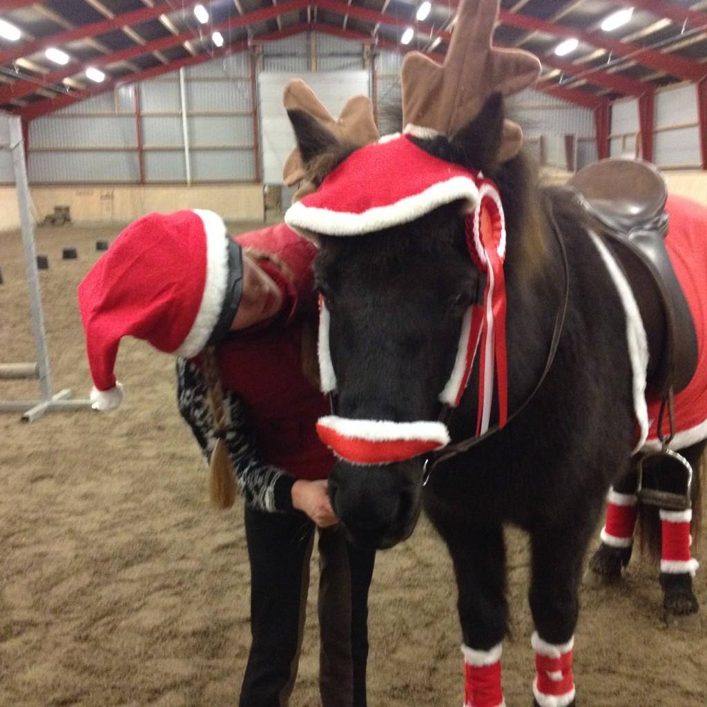 December 2014. Vinderen af Julestævnet er fundet. Mille er meget stolt af sin fine hest - og rosetten.