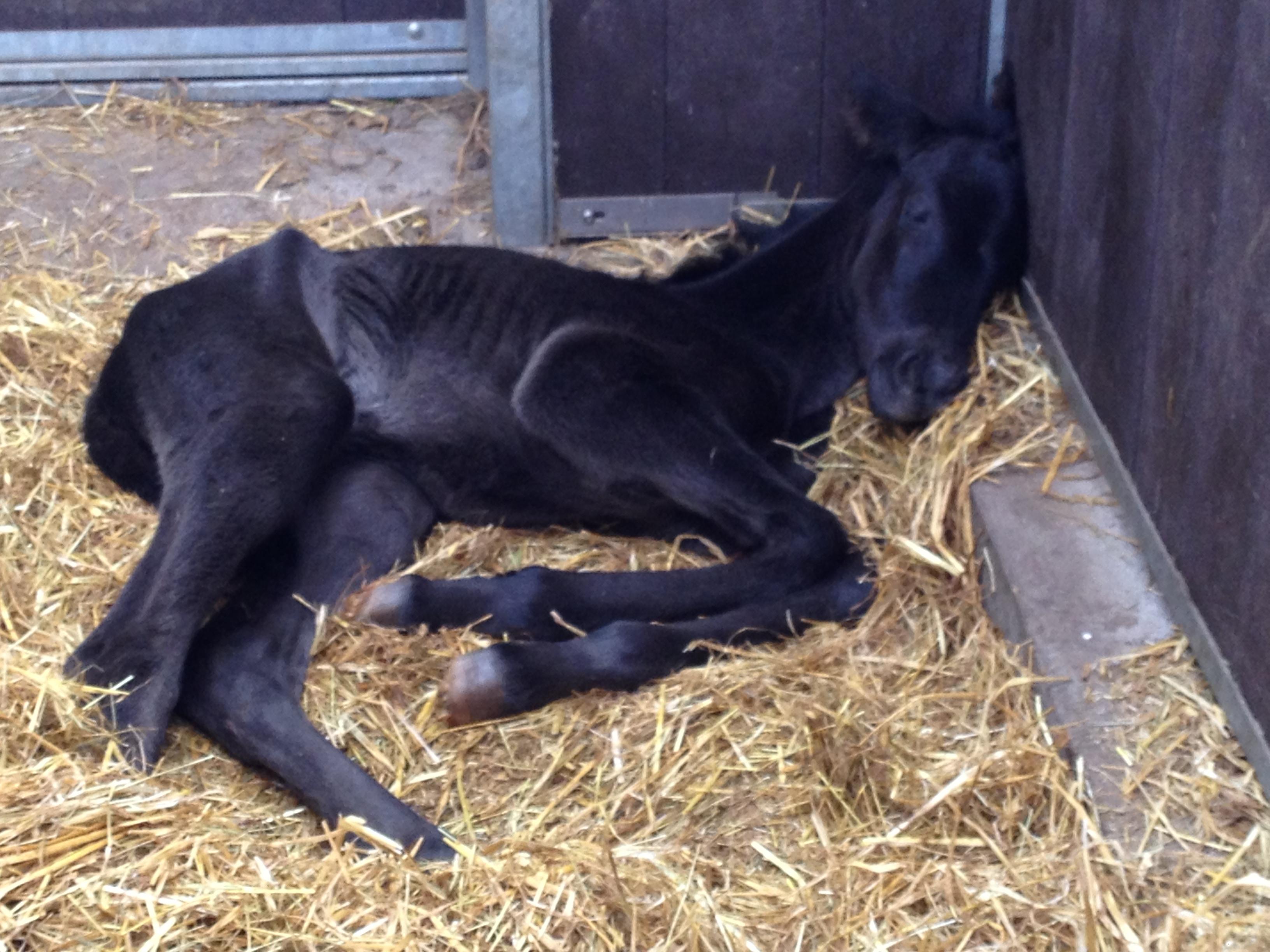9. april 2015 Det er hårdt at blive født, så Zobstyle af Bjerrede (F: Freestyle, M: Zobel)  fandt sig et mageligt hjørne til at få en lur.