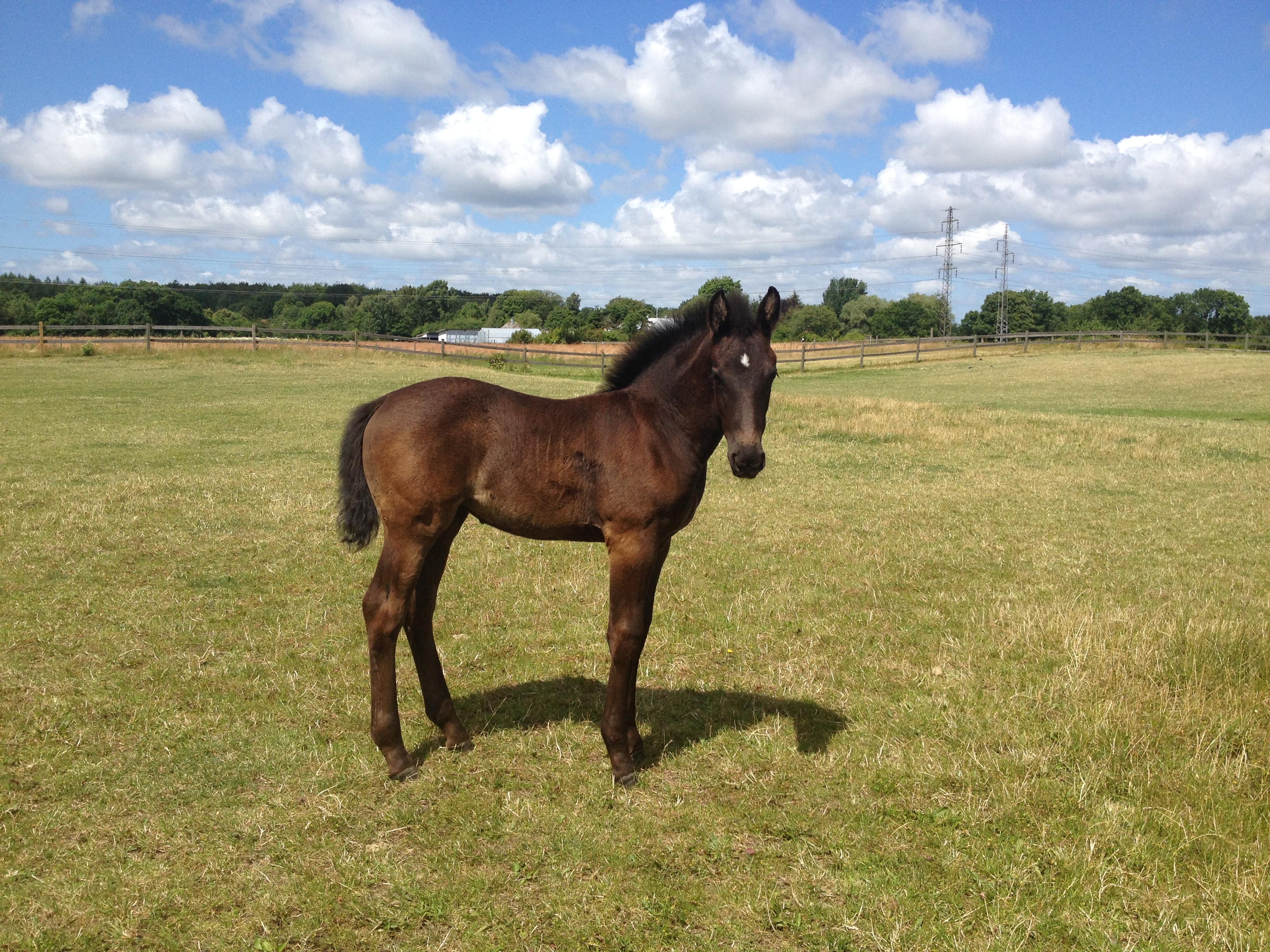 Juli 2015 Claudia af Bjerrede 5 uger gammel.