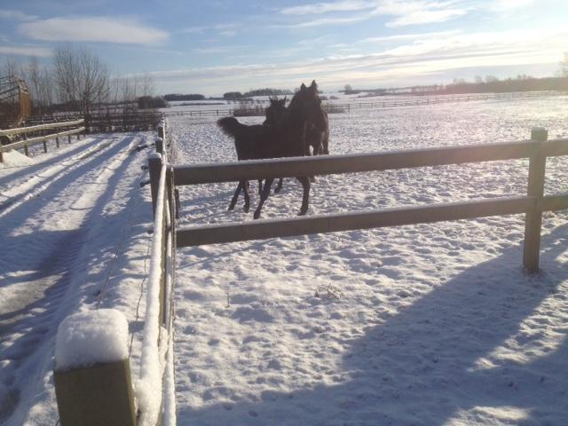 Januar 2016 Vinter kådhed på folden. Livet er dejligt.