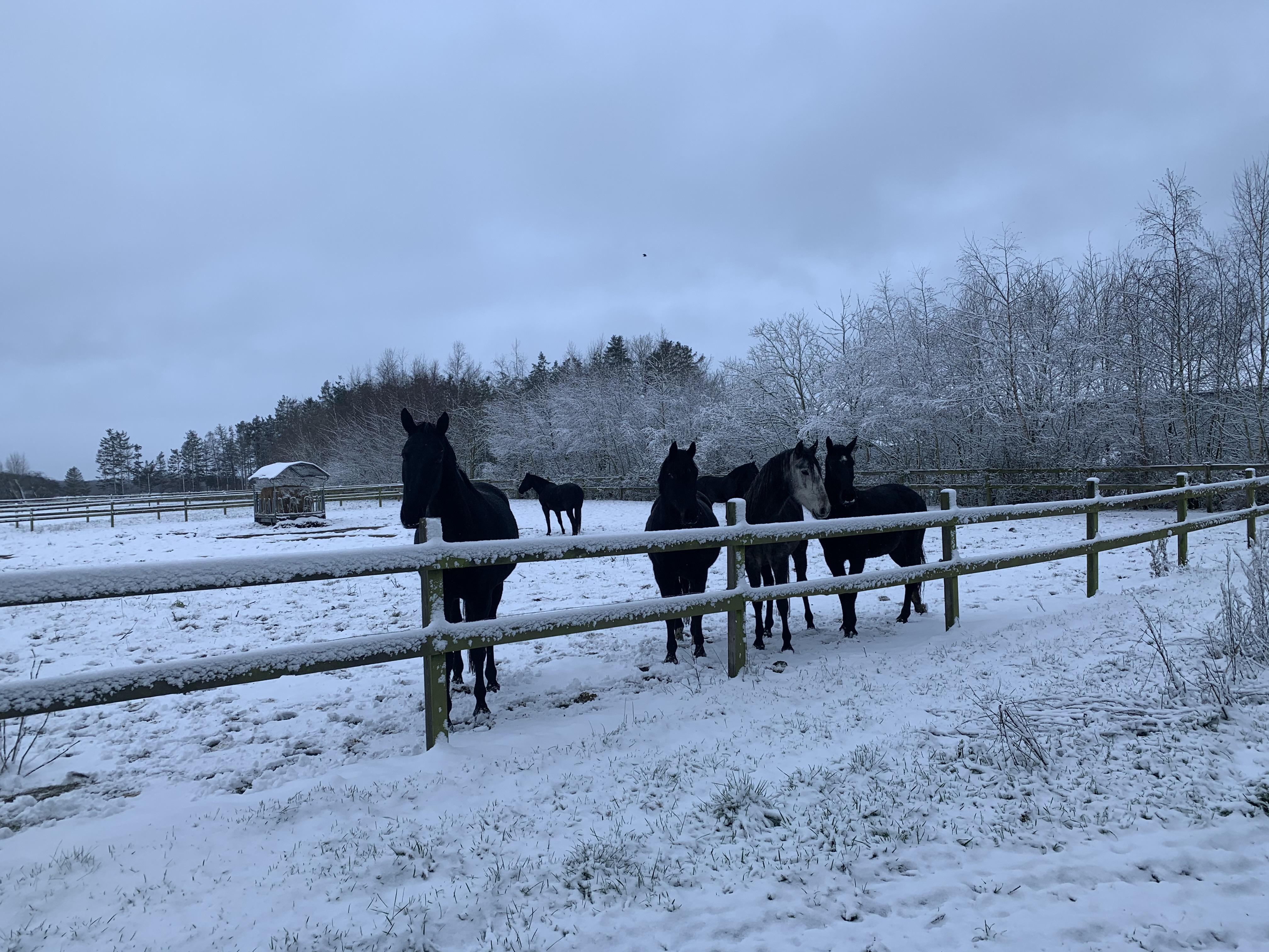 Jan 2020. Så kom vinteren til Bjerrede. Der ligger så meget sne, at vi overvejer om kælkene skal frem. Det skal nok være hurtigt - for sneen er nok væk i morgen.