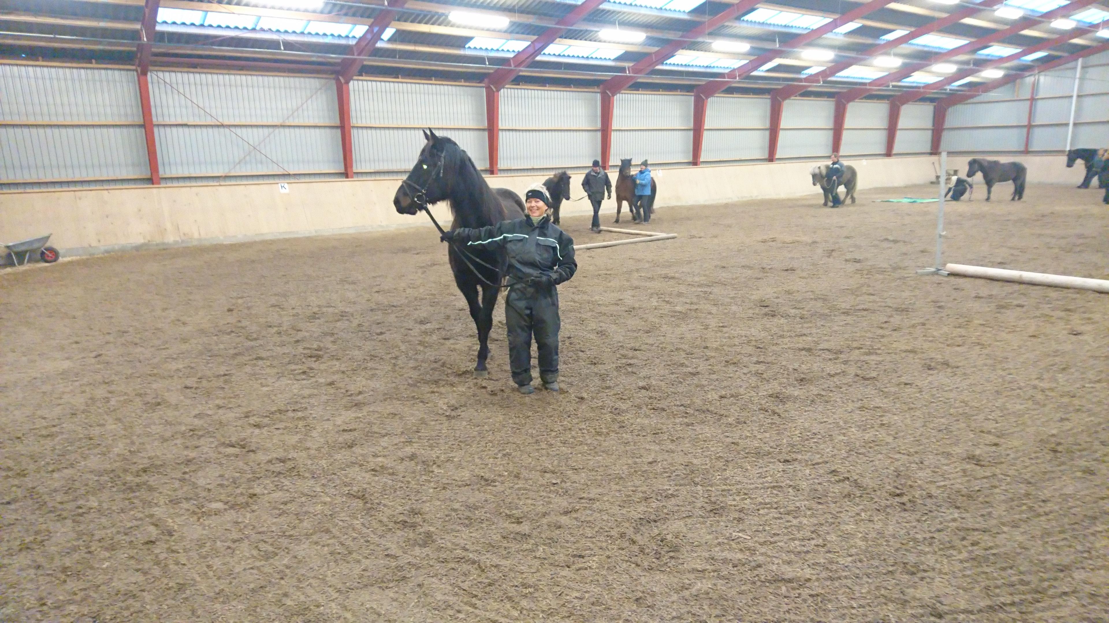 Januar 2018: Her er Hanne og Galanzo til Nytårs Ridning. Vi laver agility med hestene. De skal gå over presenninger og over cavalettis. Jeg ved ikke om hest eller trækker har det sjovest.