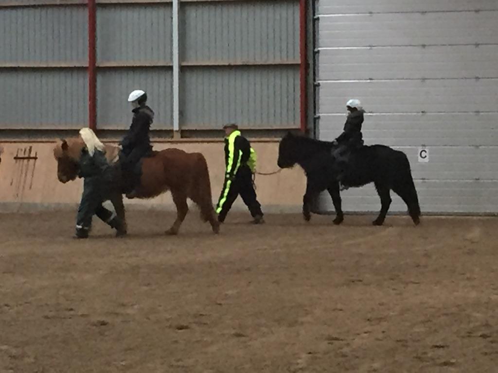 Marts 2016.  Lisa , Hannah og Rasmus rider på islænder heste. De er meget dygtige - og trækkerne har en nem opgave