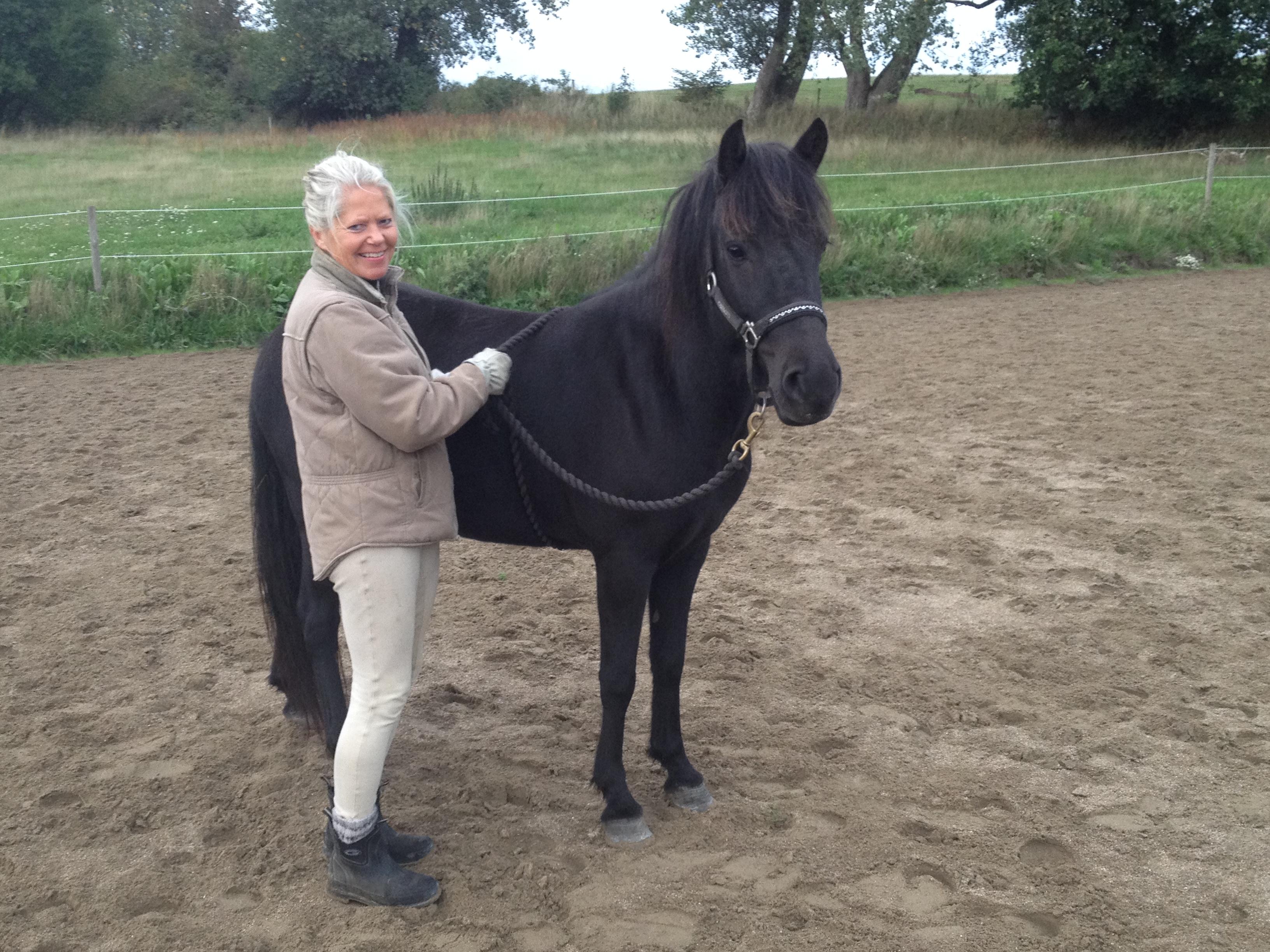 """Sept. 2018. Så er Kraka kommet """"i skole"""". Hun er nu ved at blive forberedt til trense og sadel - og hun er meget dygtig."""