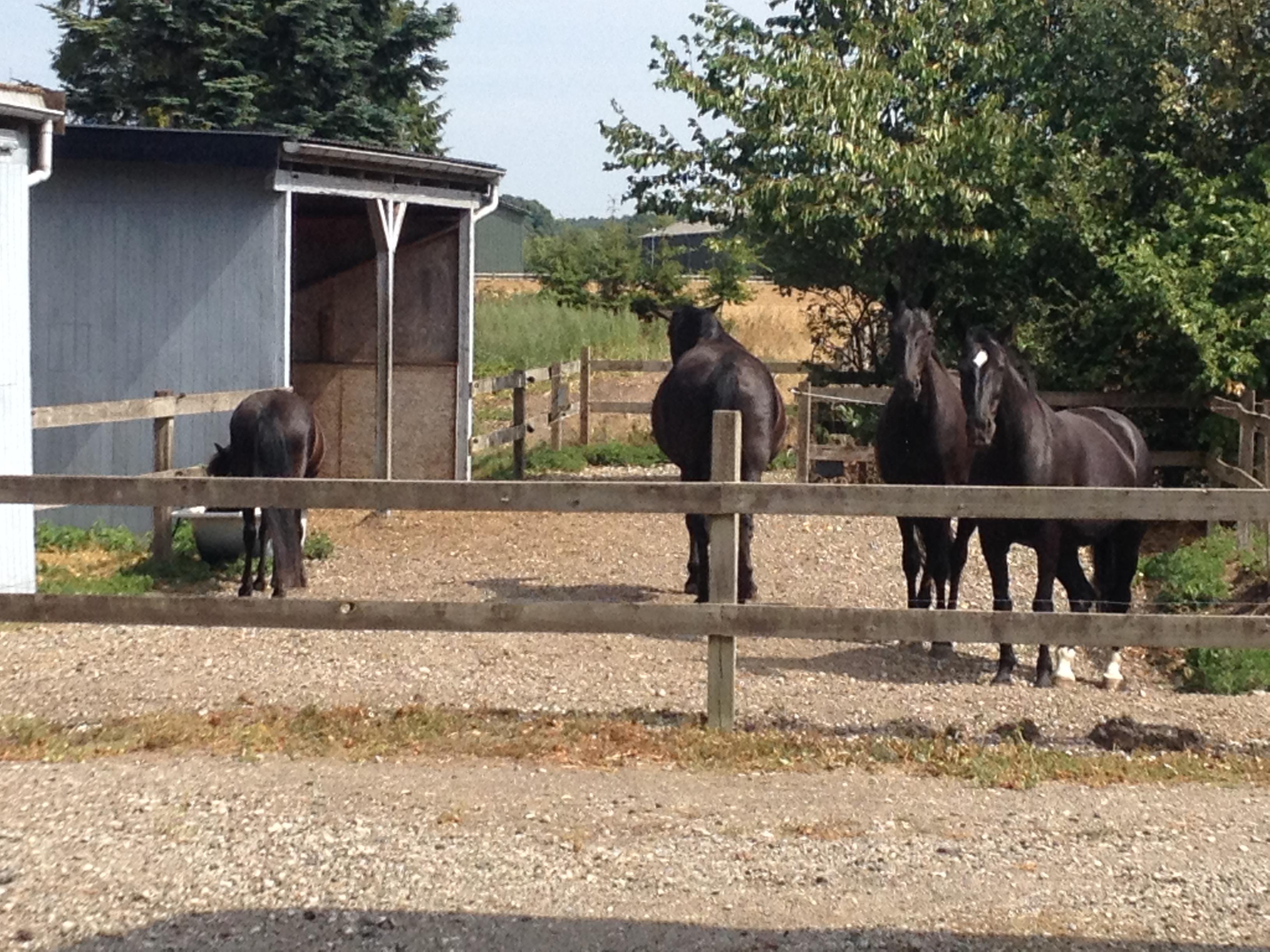 Aug 2018. Så er Kraka sat sammen med de andre heste. Det går fint. Hun får både lov til at komme til vandet og høet.